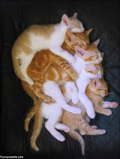 Large_Stack_Of_Cats908.jpg